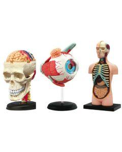 Human Anatomy Kits Set 3pcs
