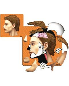 Inside My Head 3 Layer Puzzle 43pcs