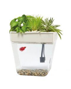 Organic Garden Fish Tank