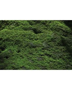 Into the Forest Floor Mat 3mW x 2mH
