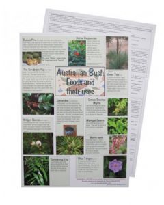 Indigenous Bush Foods and Their Uses A3 Poster