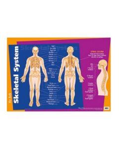 Skeletal System Chart