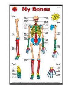 My Bones Chart