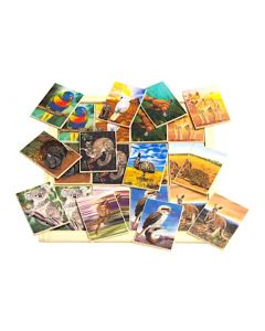 Australian Animals Large Memory Game