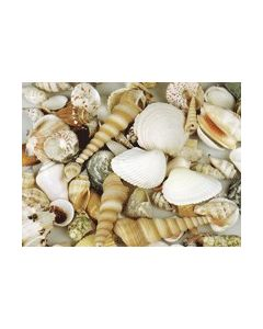 Seashells 1kg