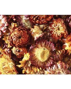 Dried Sun Flowers Asst 50g