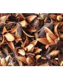 Dried Seedless Flower Pods 50g