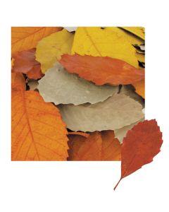 Natural Leaves 90pcs